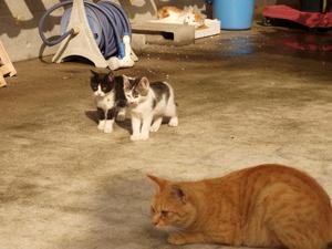 子猫探検隊
