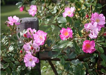 みずのもり2007春3