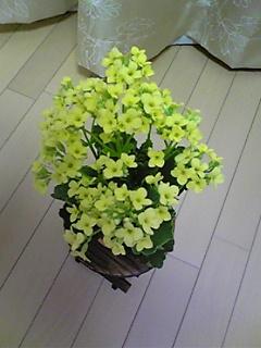 20070612_351702.jpg