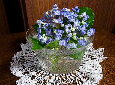 クルリン紫陽花
