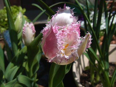 4月のお庭