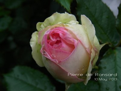 ピエール・ド・ロンサール