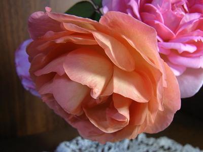 2013年のバラたち