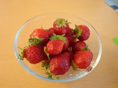 露地イチゴ