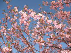 spring-by-mr.oonishi-.jpg