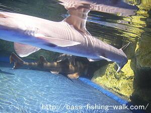 大分 県 別府 うみたまご マリーンパレス サメ アジ 水中 カメラ 防水 カメラ Optio W30 オプティオ ペンタックス PENTAX