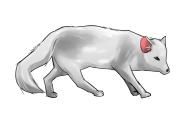 白狐(ハクコ)は神の使いで神聖なものとされている