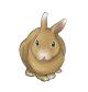 ウサギ目ウサギ科