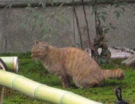 その敷地に居た猫。同じ猫を2・3回見かけたので、飼われているのか?