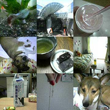 photos10