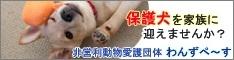 非営利 動物愛護団体 わんずぺ〜す