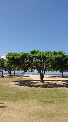 20140511サヌールビーチ