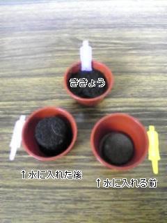20070604_151393.jpg