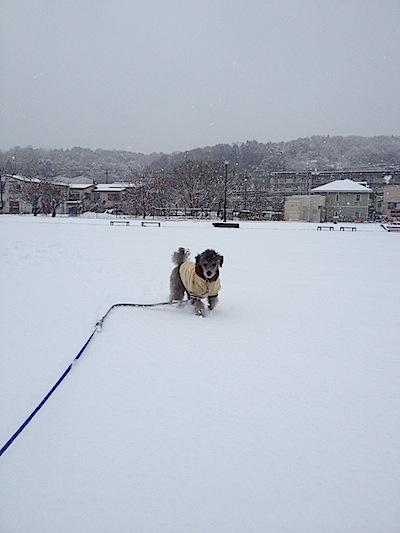 Tamちんと雪2012