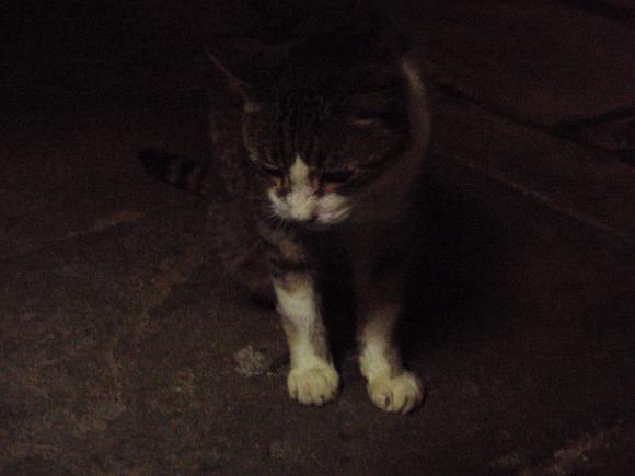 北温泉旅館 温泉猫