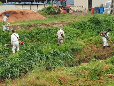 六方川の草刈り
