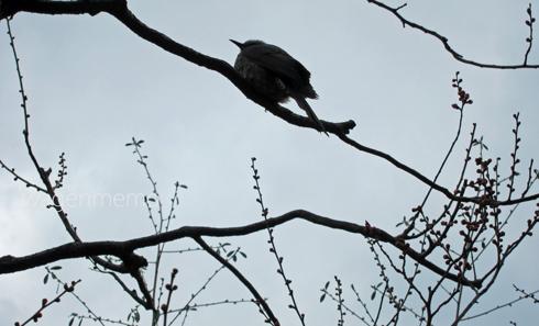 pきょうと北野天満宮鳥.jpg