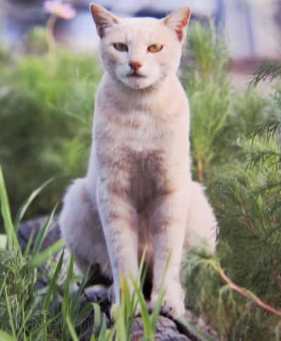 f猫2.jpg