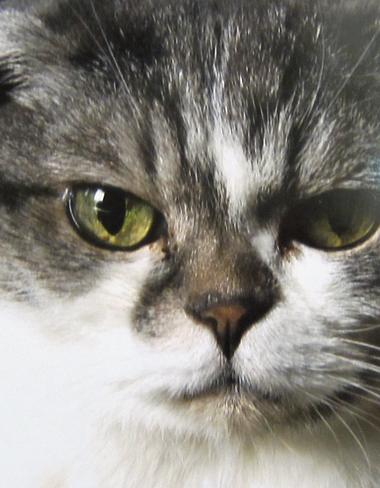 o猫10.jpg
