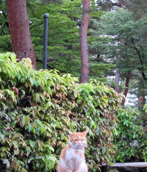 h京都相国寺で出会った猫.jpg