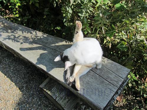 ネコ写真ブログわげんめも猫.jpg