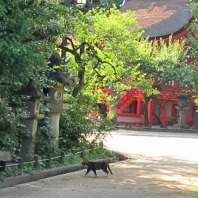 ねこネコ猫関西神社写真動物.jpg