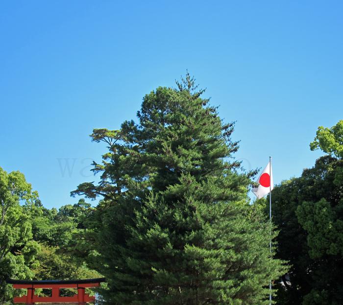 日本国旗日の丸賀茂別雷神社.jpg