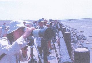 野鳥の会、有明海