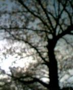 20070406_95699.jpg