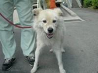熊本市20090730-1