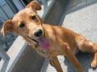 熊本市譲渡犬