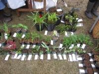 日陰植物の会