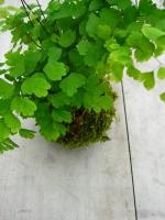 鉢植え FlowerworksSEKIKAWA