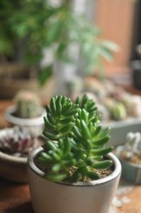 日陰植物の会の植物とコダルマ