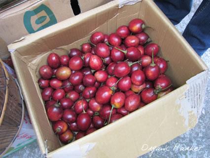 Organic Market03.jpg