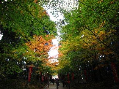 参道3(醍醐寺).JPG