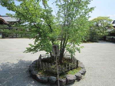 仁和寺6.JPG