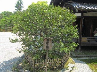 仁和寺5.JPG