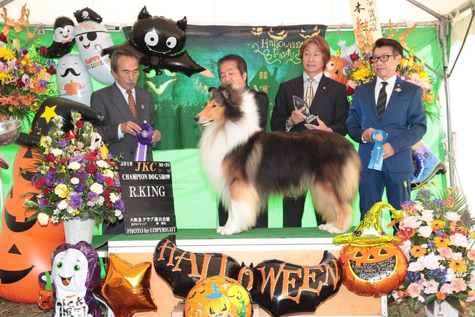 ラフコリー デルタ 大阪北クラブ連合会展 リザーブキング獲得