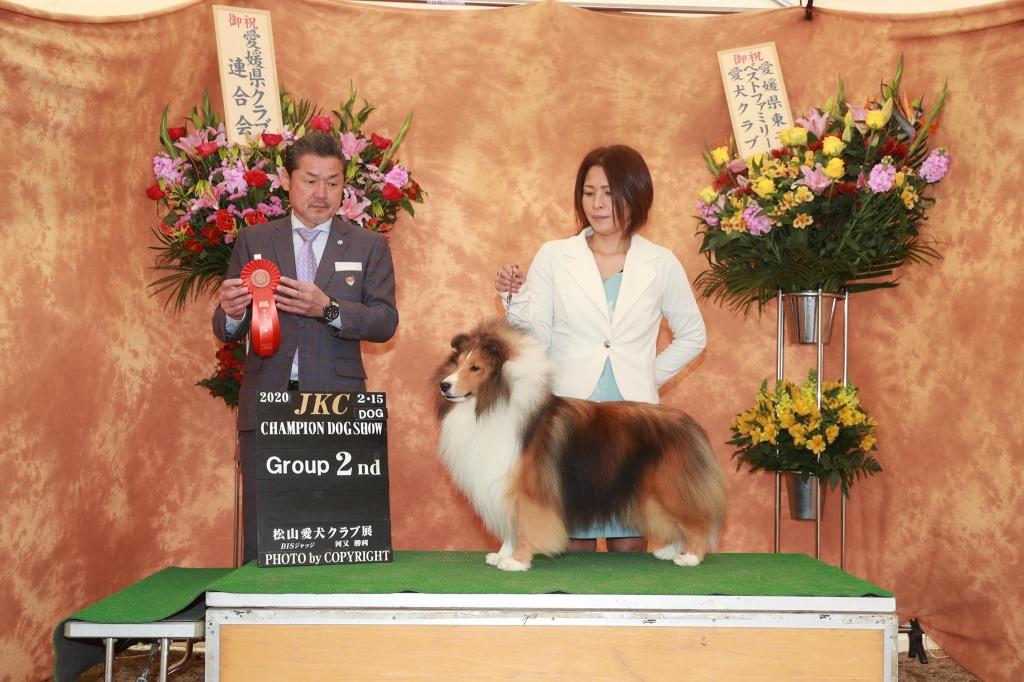 シェルティ ノゥボー JKC松山愛犬クラブ展 G2獲得
