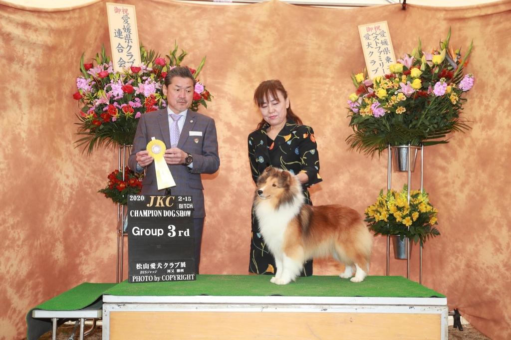 シェルティ アリアナ JKC松山愛犬クラブ展 G3獲得