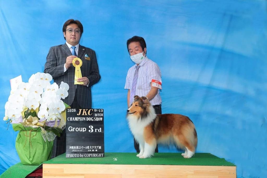 シェルティ アリアナ JKC沖縄南部エトワールクラブ展 BOB G3獲得