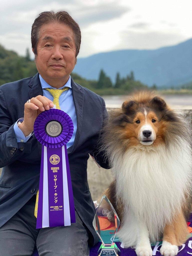 シェルティ ノボ JKC神戸甲南全犬種クラブ展 リザーブキング獲得