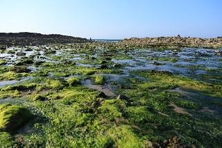 痛風 海藻