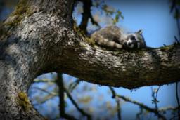 木の上のたぬ