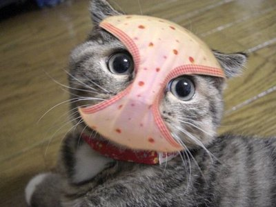 【画像】テレビ番組のパンチラ★87 [猫歓迎!] [無断転載禁止]©bbspink.com->画像>2145枚