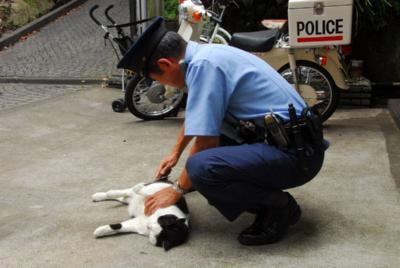 泥棒猫逮捕