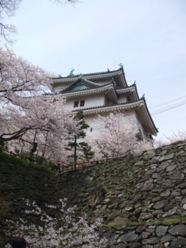 花満開の和歌山城