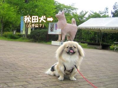 秋田犬と茶豆