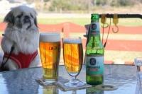 ビール、他